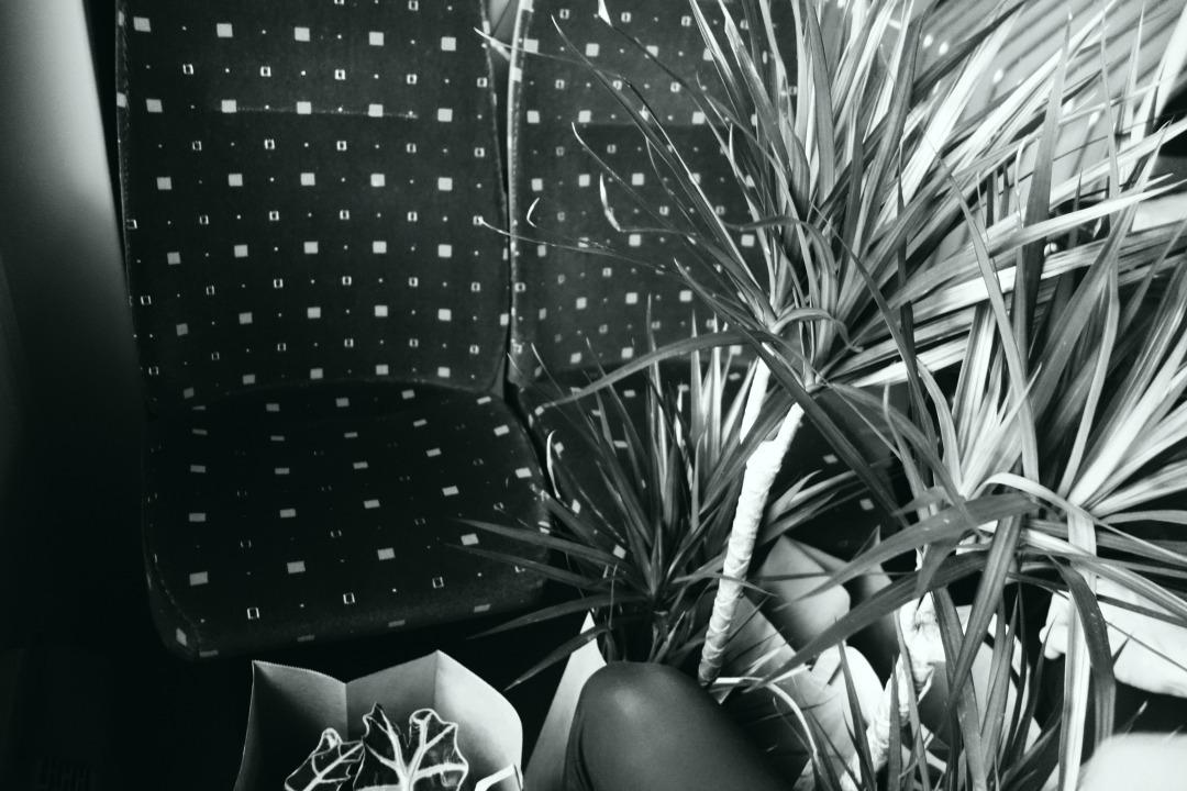 plantebuss